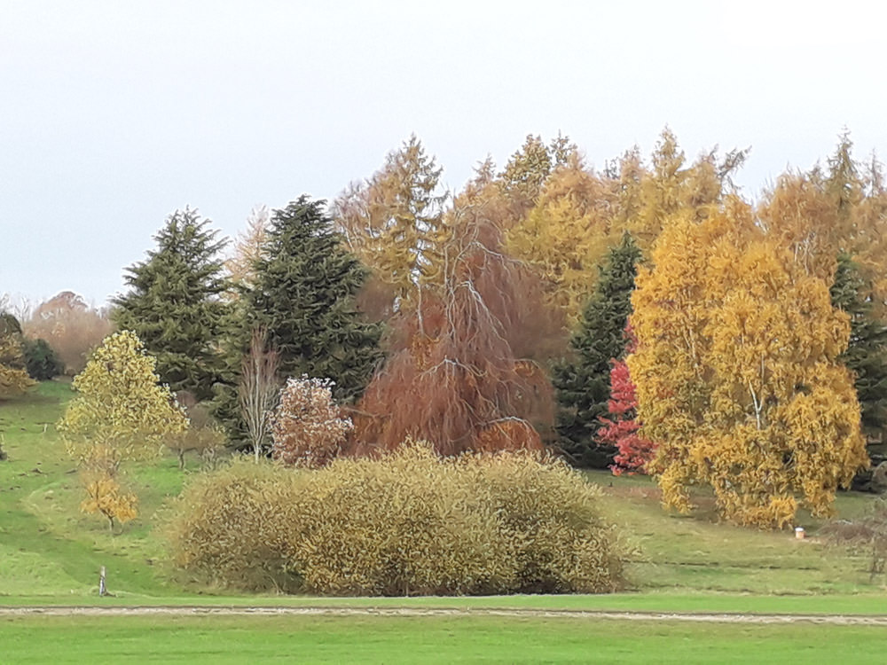 arboretum-autumn-tree-near-the-lake.jpg