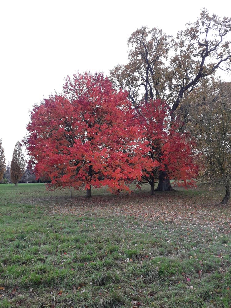 arboretum-inspiration-autumn-tree.jpg