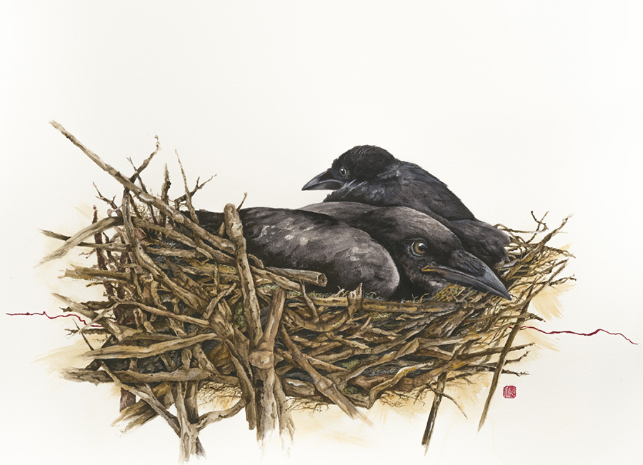 Crow nest.jpg