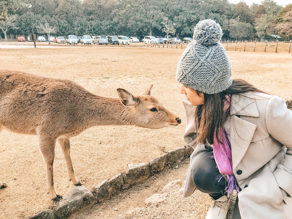 Feeding the deer in Nara - Kyoto, Japan