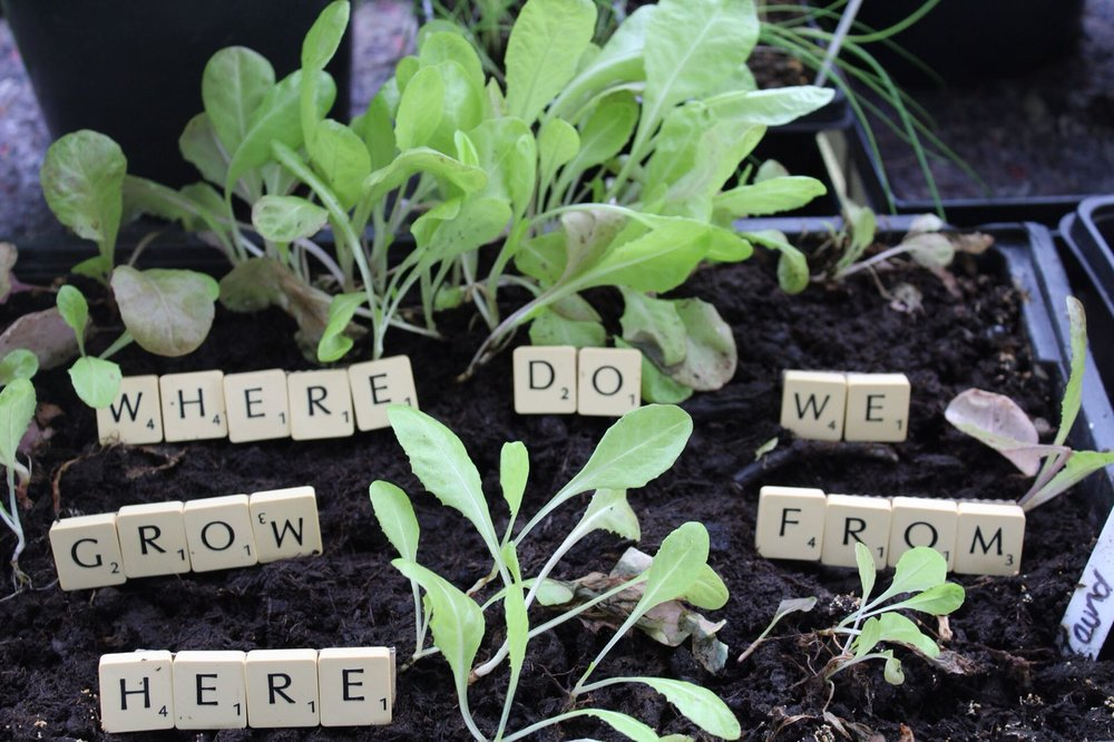Why the 'Where do we grow from here' theme? - As a group of Baptist Churches in Great Britain, this is a needed and healthy question. Firstly, to ask as prayer to our Father, then to ask of each one of us as individual followers and finally to ask of our churches.