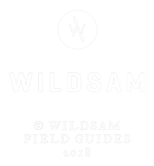 WILDSAM_LOGO_FOOTER.png