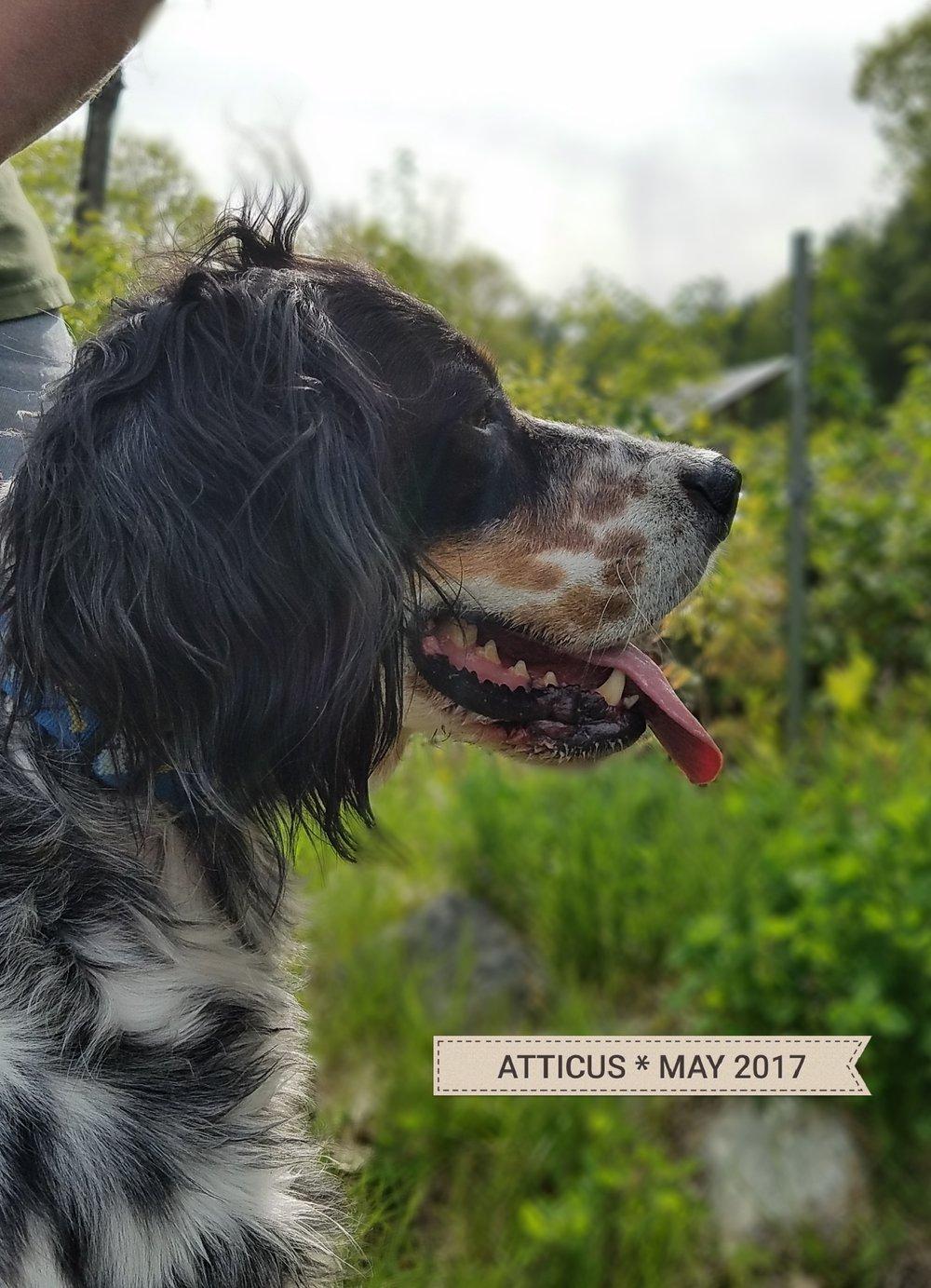 Atticus520171.jpg