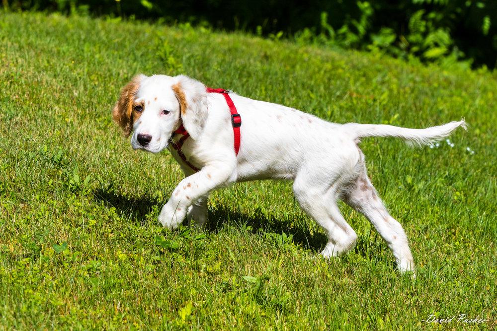 WinnieMilo 4916 D Pushee1.jpg