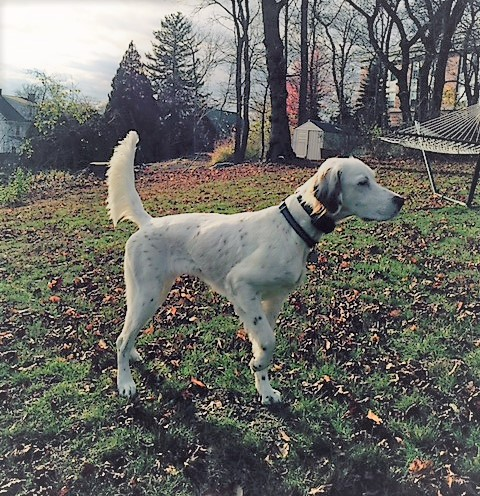 WinnieRoy 71615 B Ayles.jpg