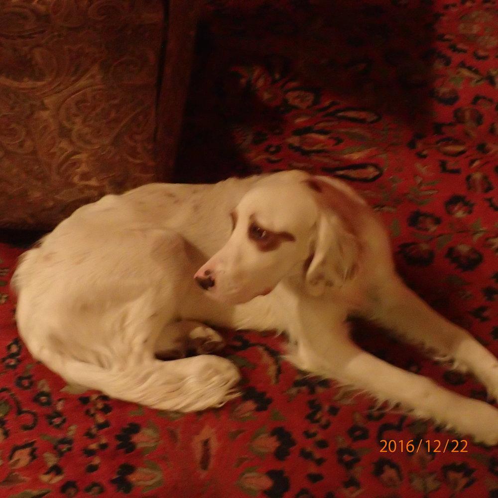 WinnieMilo41916 T Spinella2.JPG