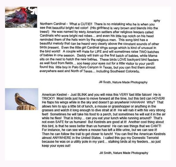 Northern Cardinal & American Krestrel
