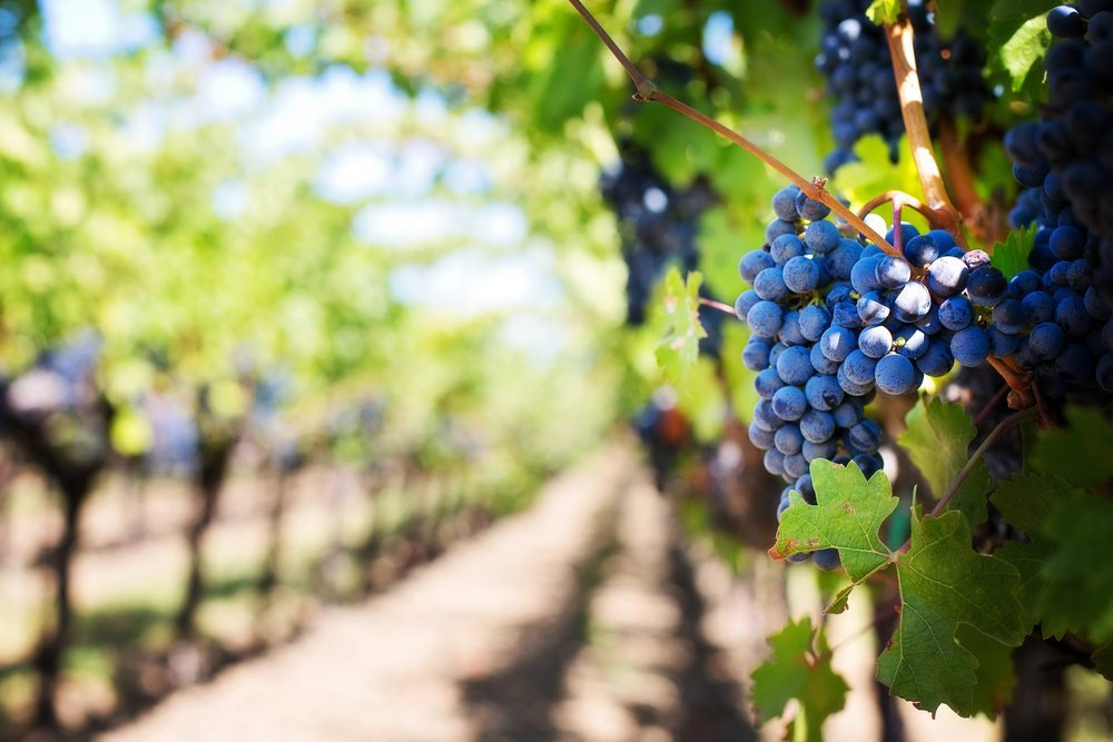 agriculture-farm-farming-39511.jpg