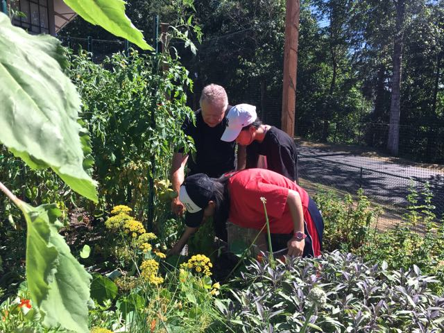 Chef Ron Askew at Forest Ridge School of the Sacred Heart's Garden / Photo by Kim Marshall