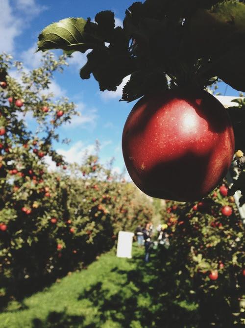 apple-tree.jpeg