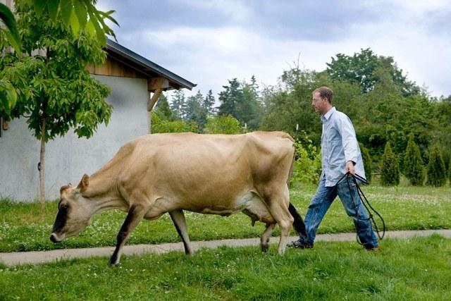 kurt-cow.jpeg