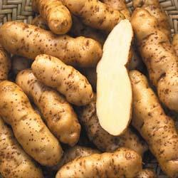 ark-prod-ozette_potatoes.jpeg