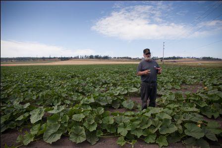 Dale Sherman in his field of Sugar Hubbard squash. Photo: Lara Ferroni