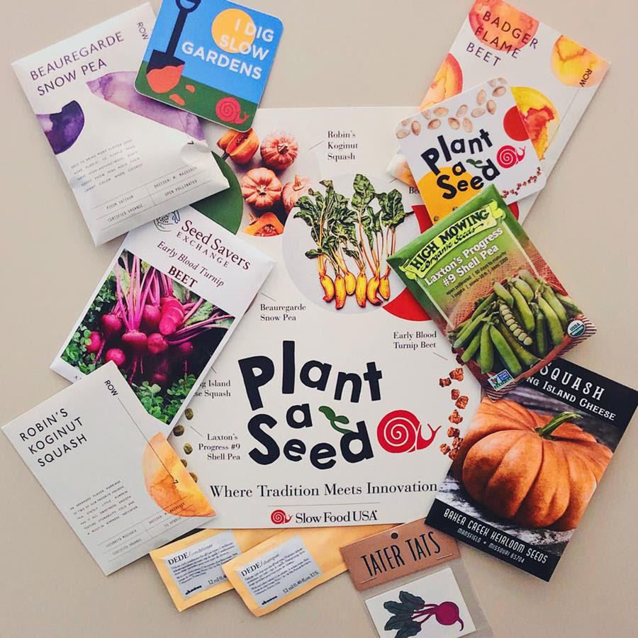 plant-seed-2019.jpg