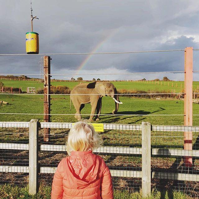 Enjoying the views at @noahsarkzoobristol 🐘 🌈 . . . #noahsarkzoofarm #toddlerlife #zoo #rainbow #elephant
