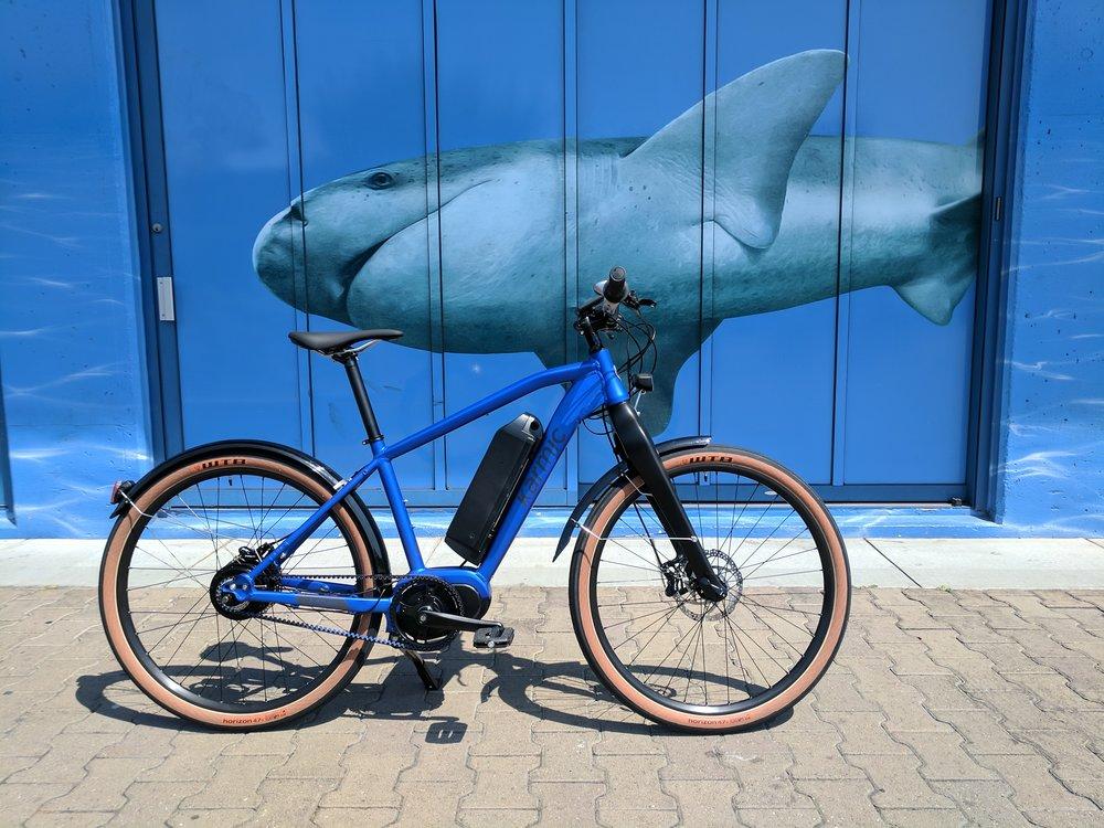 Koben_Shark.jpg