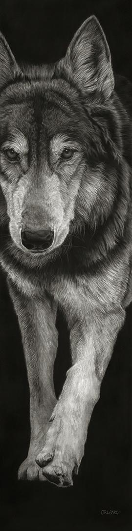 Orlando- Wolf 48x12 copy.jpg