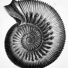 5c5341c4ac55c5e15db41afbe7a827e7--science-illustration-botanical-illustration.jpg