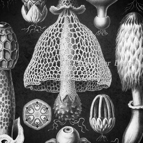 d014fdeadcdb922a91c9211087a81361--mushroom-art-mushroom-spores.jpg