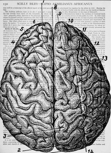 Vintage-anatomical-drawing-Brain-Dictionary-Art-Print.jpg