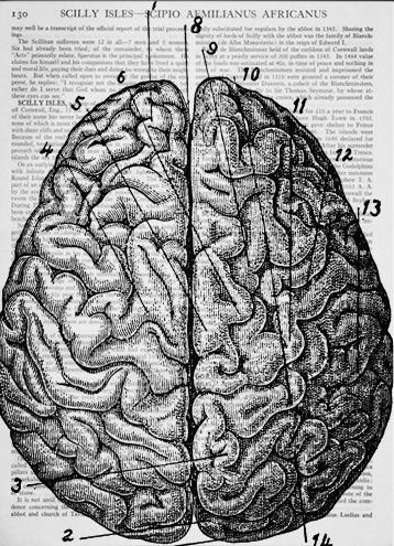 Vintage-anatomical-drawing-Brain-Dictionary-Art-Print.jpg