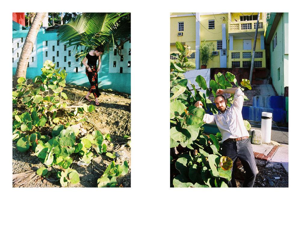 Dorklets in colonized paradise  6x95.jpg