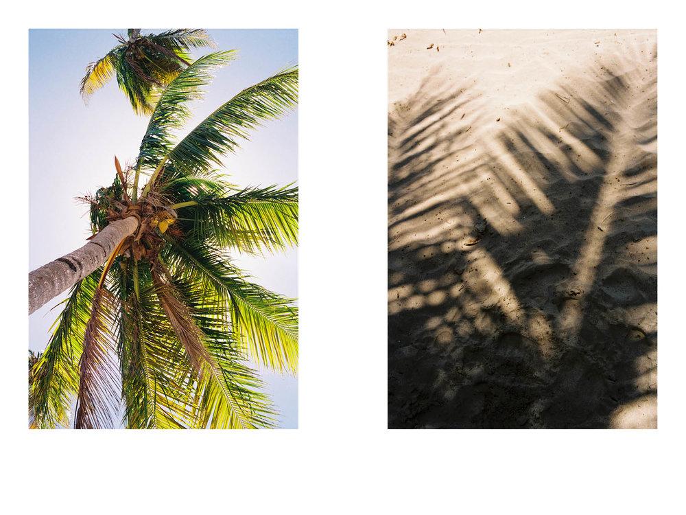 Dorklets in colonized paradise  6x935.jpg