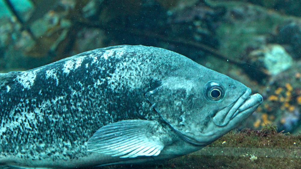 Aquarium_004.jpg
