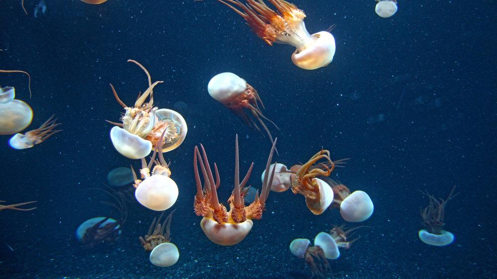 Aquarium_053.jpg