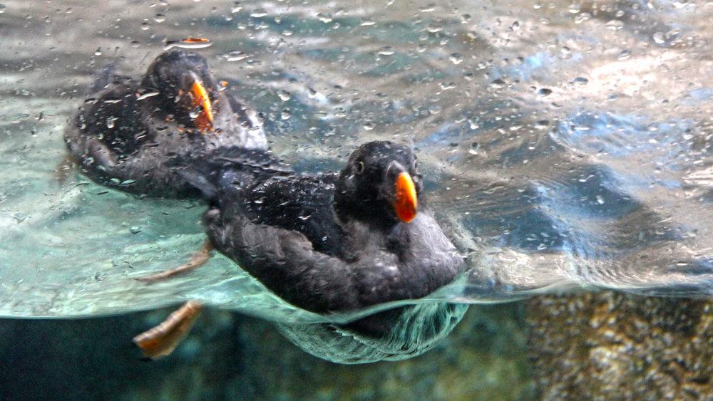 Aquarium_057.jpg