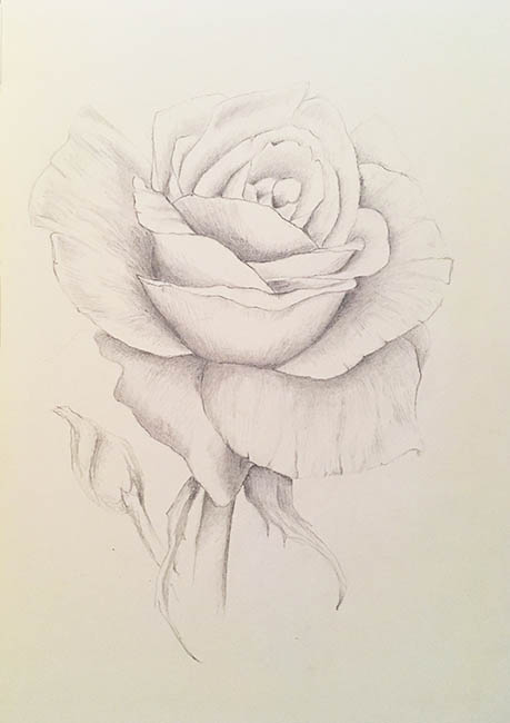 2018-summer-rose-drawing-web.jpg