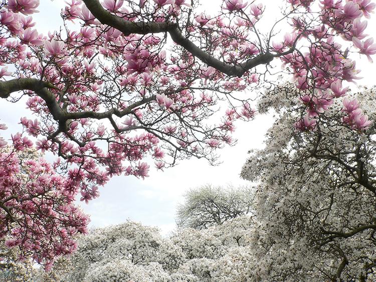 blossoms.jpeg