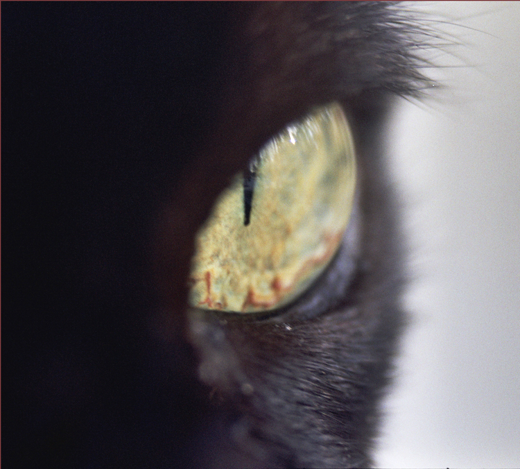 miles-eye.jpeg