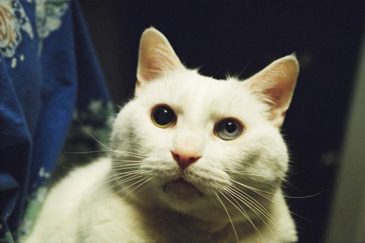 white-cat.jpeg