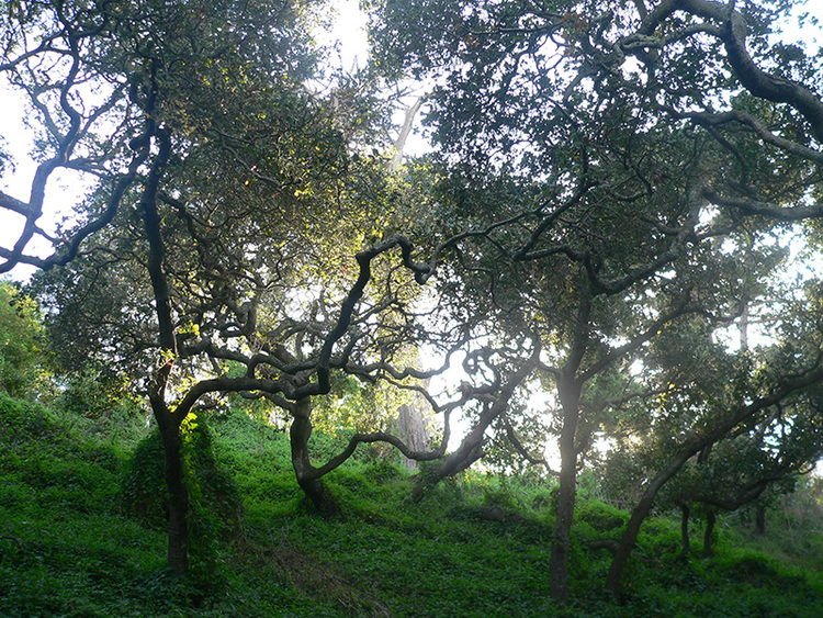 sf-woods.jpeg
