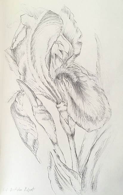 2018-iris-drawing-web.jpg