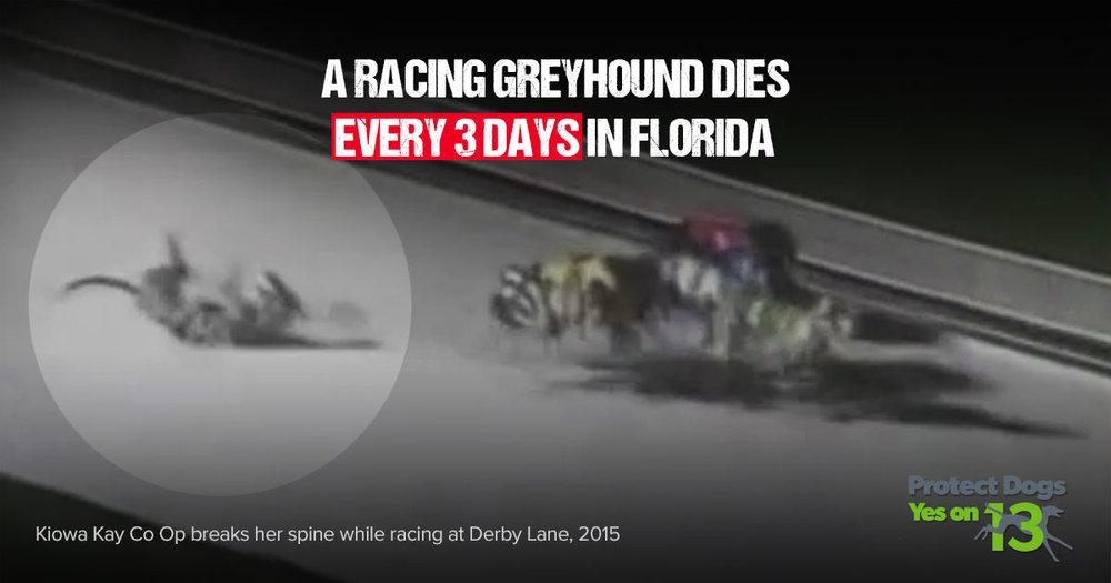 every-three-days-deaths-meme-Derby-Lane.jpg