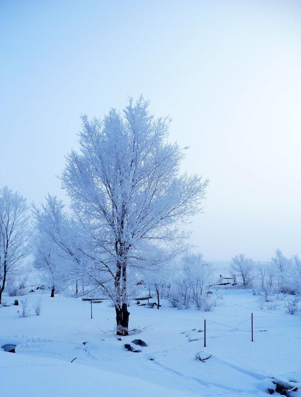 snowYard4.jpg