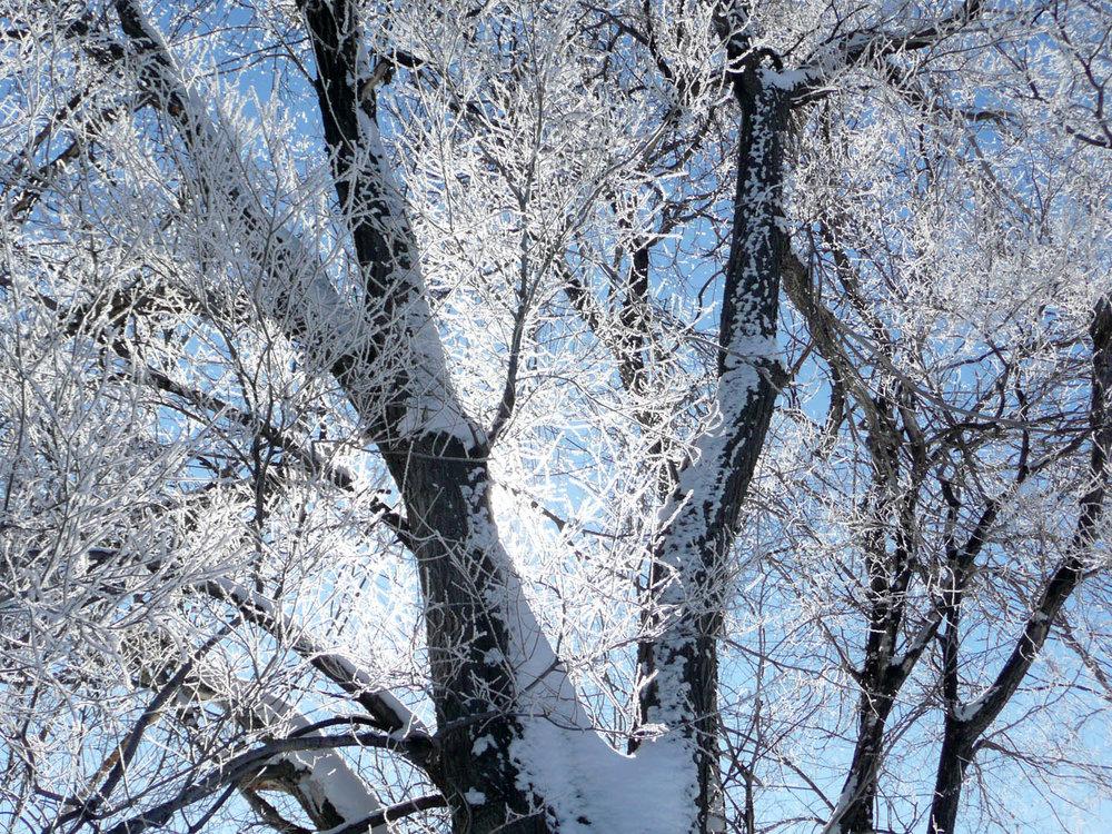 treeSnow.jpg