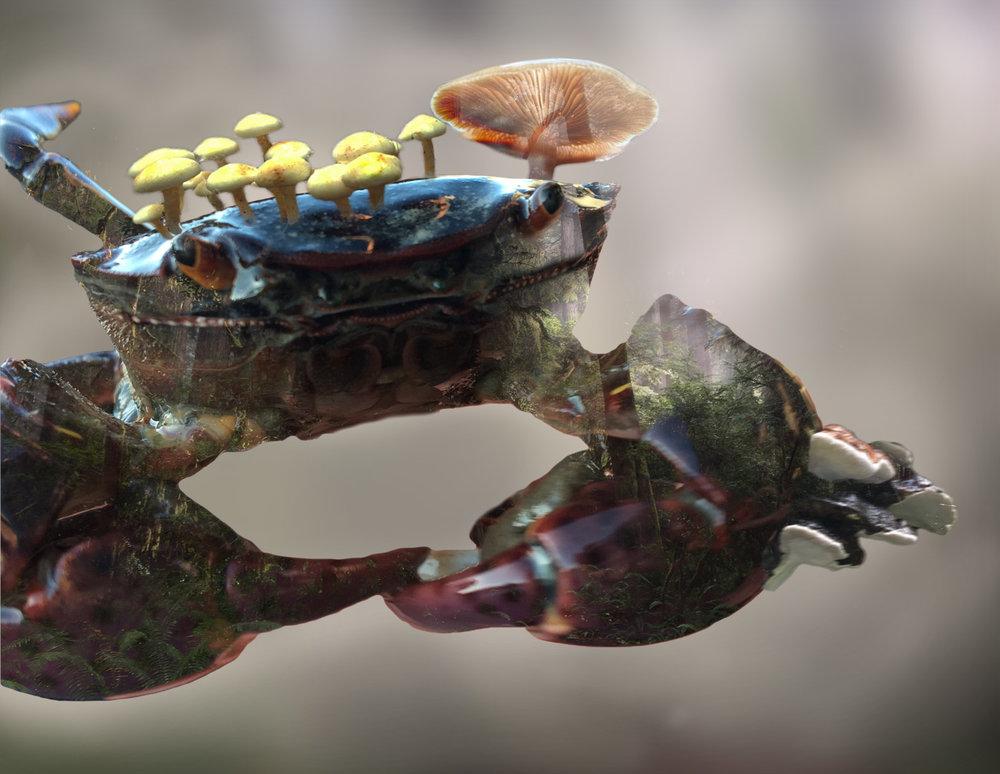 Crab Shroom.jpg