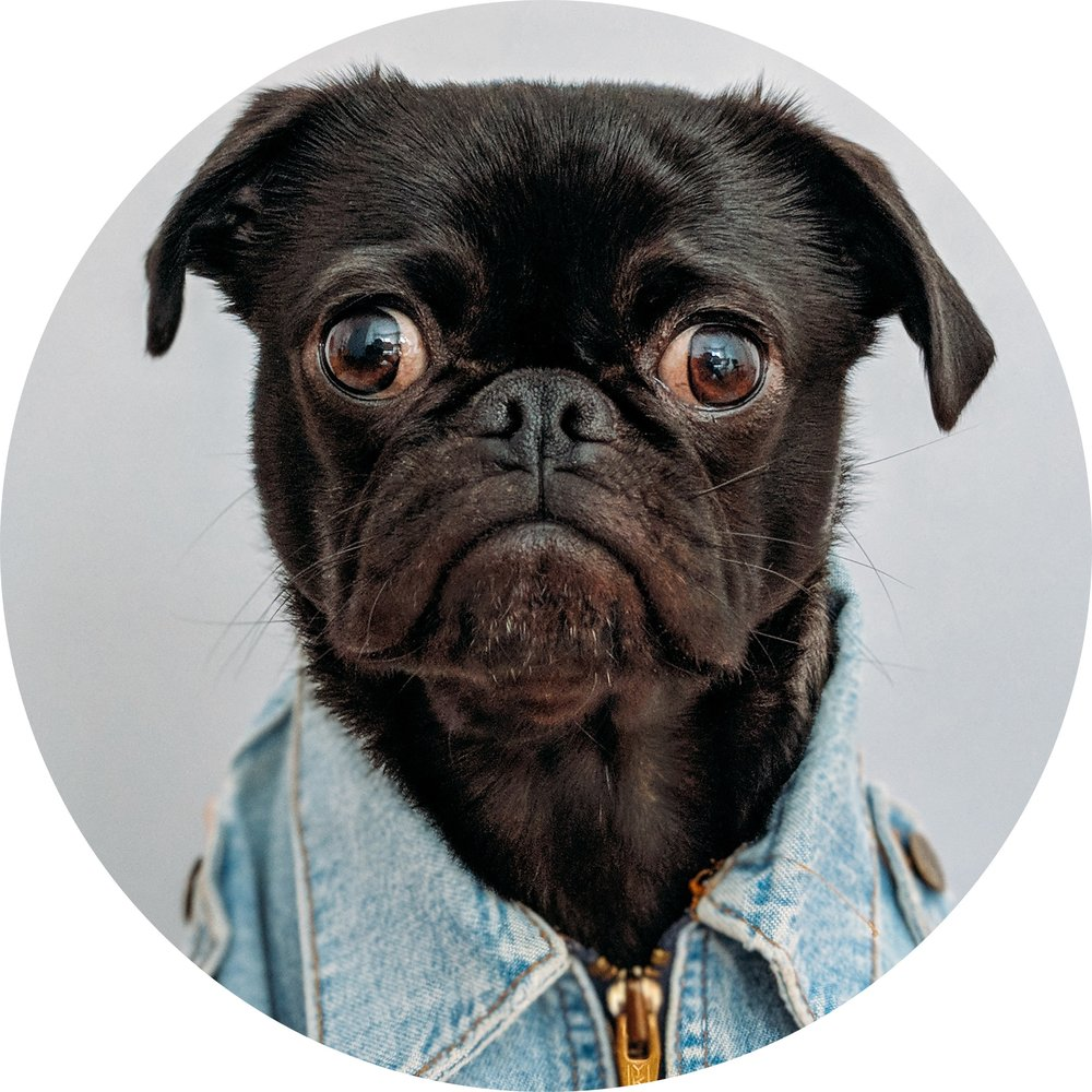 sad-dog-round.jpg