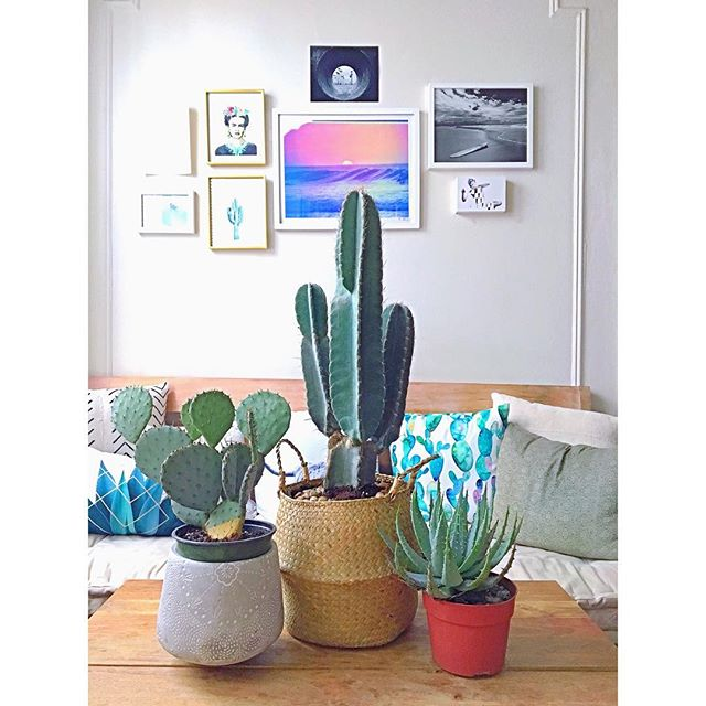 New Friends 🌵✨💜 New Art 🎨#home #cacti #nyc #green #homemaking #design #becreative #love #aptliving #desertvibes Art by my awesome cousin @jennsmucker , my friend @shehitpausestudios , @society6 and @adamgkrueger * * * * #astoria #cactus #art #californiavibes #society6 #urbanoutfitters #westelm #ilovemyapt #queens #actor #loveyourspace #interiordesign #boho #bohovibes #color #beachy #shehitpause #photography #art
