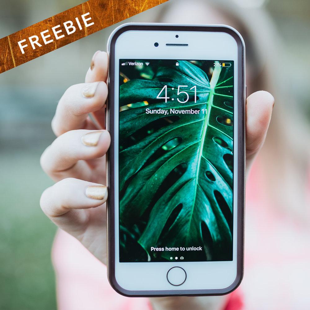 free phone wallpaper - monstera leaf