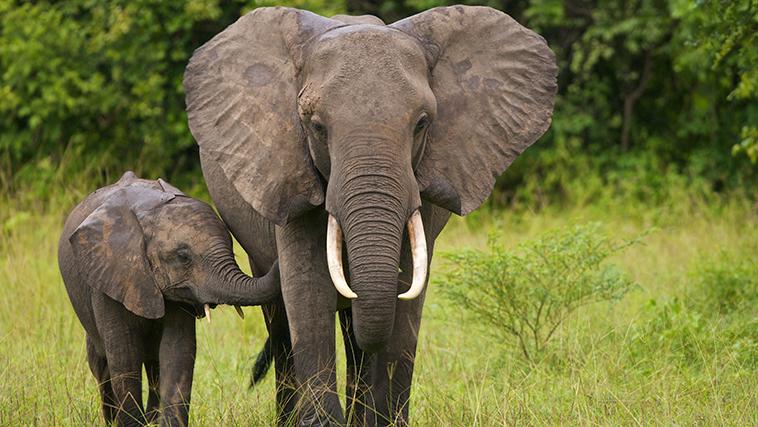 elephant ebay.jpg