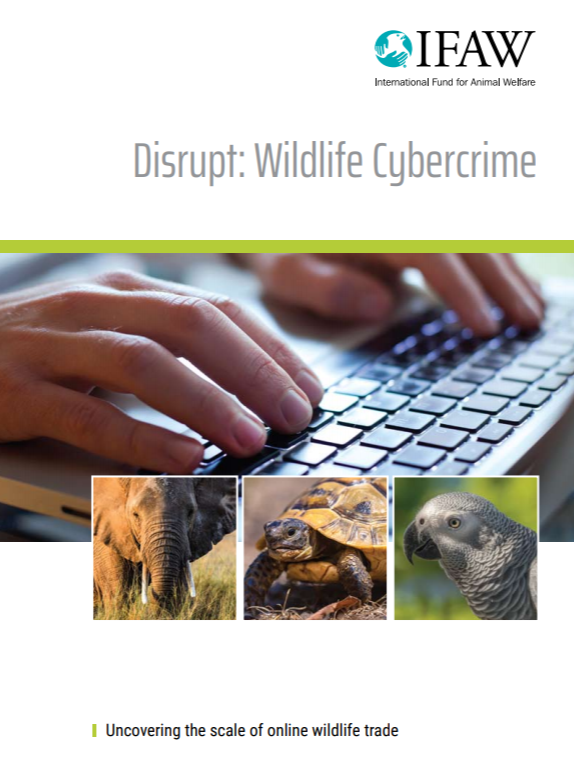 Disrupt: Wildlife Crime | Uncovering the Scale of Online Wildlife Trade