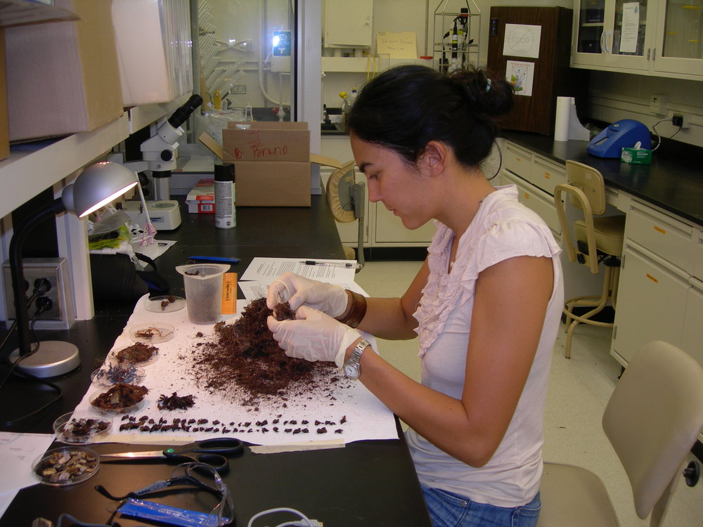dissecting an albatross bolus from midway atoll