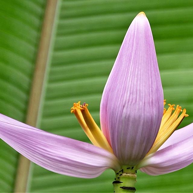 blossom-3149089_960_720.jpg