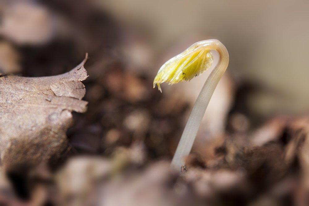 seedling-1284663_1280.jpg