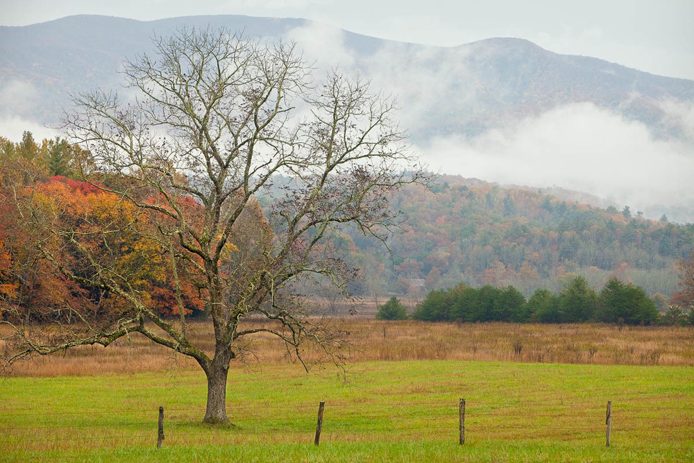 Cades Cove Tree in Fog