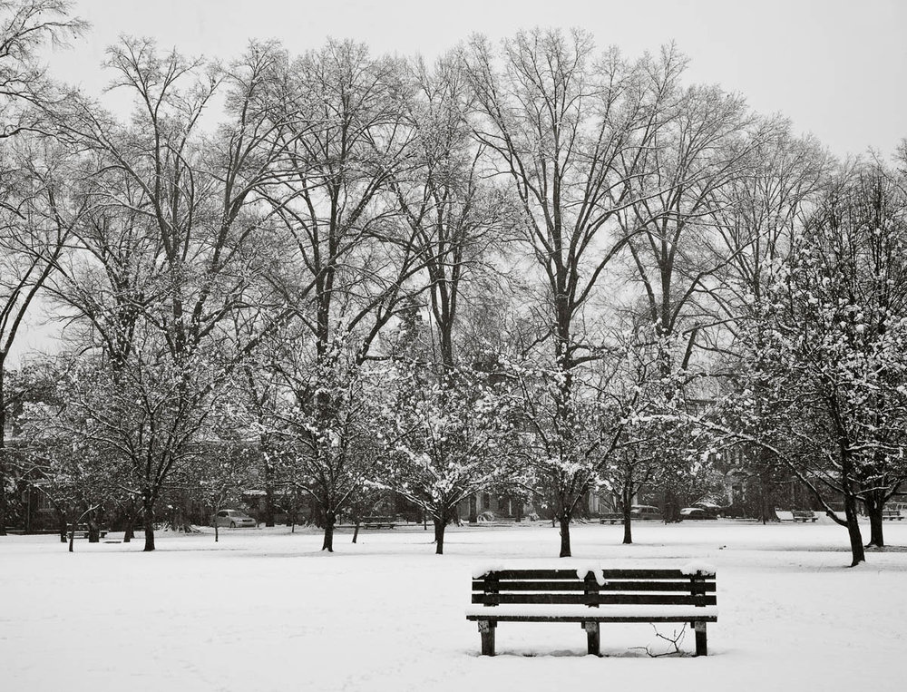 Bench and Trees